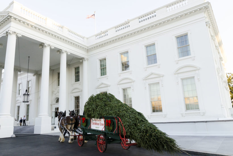 A horse-drawn wagon brings the official White House Christmas Tree to the North Portico entrance of the White House, Monday, November 20, 2017 in Washington, D.C. The tree, presented by the Chapman family of Silent Night Evergreens in Endeavor, Wisconsin, will be stand in Blue Room of the White House for the Christmas season.
