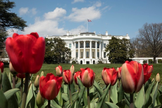Blooming red tulips are seen in the gardens of the South Lawn of the White House, Thursday, April 5, 2018, in Washington, D.C. The White House Spring Garden Tour is scheduled for the weekend of April 14th and 15th, 2018.