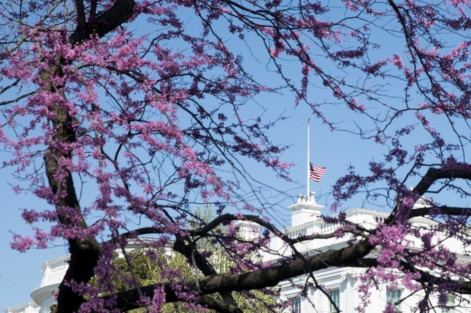 The American flag, seen through the branches of an Eastern Redbud tree planted by former President George H.W. Bush and his wife Barbara Bush, is flown at half-staff above the White House in memory of former First Lady Barbara Bush, Wednesday, April 18, 2018, in Washington, D.C.